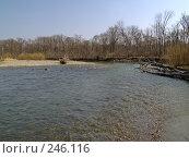 Купить «Весенняя Уссури», фото № 246116, снято 8 апреля 2008 г. (c) Олег Рубик / Фотобанк Лори