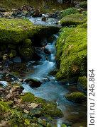Купить «Голубой лесной ручей», фото № 246864, снято 31 октября 2007 г. (c) Александр Телеснюк / Фотобанк Лори