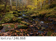 Купить «Осенний лес в Германии», фото № 246868, снято 31 октября 2007 г. (c) Александр Телеснюк / Фотобанк Лори