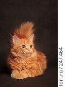 Купить «Рыжий кот», фото № 247464, снято 13 декабря 2017 г. (c) Андрей Доронченко / Фотобанк Лори
