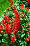 Нереально яркие цвета. Красные цветы., фото № 249168, снято 25 августа 2007 г. (c) Игорь Жоров / Фотобанк Лори