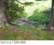 Купить «Природа горного Алтая», фото № 250060, снято 6 августа 2005 г. (c) Наталья Астахова / Фотобанк Лори