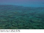 Купить «Мелководье средиземного моря», фото № 252576, снято 21 августа 2006 г. (c) Александр Соболев / Фотобанк Лори