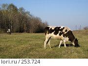 Коровка. Стоковое фото, фотограф Николай Федорин / Фотобанк Лори