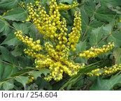 Купить «Желтые цветы», фото № 254604, снято 18 марта 2008 г. (c) Олег Дрыго / Фотобанк Лори