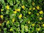 Весна, фото № 256036, снято 12 апреля 2008 г. (c) Карелин Д.А. / Фотобанк Лори