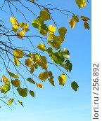 Купить «Листья», фото № 256892, снято 19 сентября 2018 г. (c) ElenArt / Фотобанк Лори