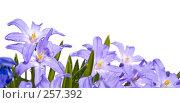 Купить «Нижний бордюр сиреневых цветов в каплях росы», фото № 257392, снято 22 апреля 2018 г. (c) Светлана Кучинская / Фотобанк Лори