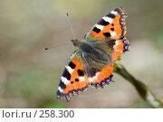 Купить «Первая бабочка», фото № 258300, снято 12 апреля 2008 г. (c) Малышева Мария / Фотобанк Лори