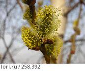 Купить «Весна», фото № 258392, снято 12 апреля 2008 г. (c) Анна Финютина / Фотобанк Лори