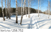 Березовый пейзаж, фото № 258752, снято 25 февраля 2007 г. (c) Юрий Бельмесов / Фотобанк Лори