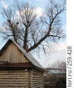Купить «Маленькая деревенская баня под высоким деревом», фото № 259428, снято 6 апреля 2008 г. (c) Равиль Шангараев / Фотобанк Лори