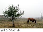 Купить «Осенний пейзаж с одинокой лошадью и деревом», фото № 262176, снято 28 октября 2004 г. (c) Виктор Филиппович Погонцев / Фотобанк Лори