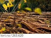Купить «Опавшие листья на пахотном поле», фото № 263620, снято 19 апреля 2018 г. (c) Aleksander Kaasik / Фотобанк Лори
