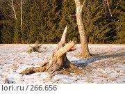 Купить «Просто коряжка», фото № 266656, снято 1 января 2008 г. (c) Вячеслав Потапов / Фотобанк Лори