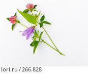 Купить «Небольшой букет полевых цветов», фото № 266828, снято 12 августа 2006 г. (c) Анатолий Заводсков / Фотобанк Лори
