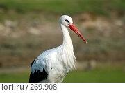 Купить «Гордый белый аист», фото № 269908, снято 3 октября 2007 г. (c) Ярослав Никитин / Фотобанк Лори