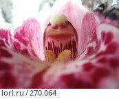 Купить «Орхидея», фото № 270064, снято 8 марта 2008 г. (c) Ирина Стюфеева / Фотобанк Лори