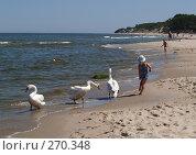 Купить «Девочка и лебеди», фото № 270348, снято 9 июня 2007 г. (c) Ирина Борсученко / Фотобанк Лори