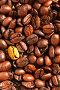 Золотое кофейное зерно, фото № 273348, снято 29 апреля 2006 г. (c) Роман Сигаев / Фотобанк Лори