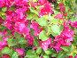 Цветы, фото № 274184, снято 30 марта 2008 г. (c) Zlataya / Фотобанк Лори