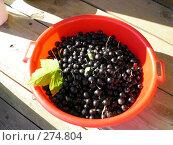 Купить «Миска черной смородины», фото № 274804, снято 1 января 2003 г. (c) Юлия Дашкова / Фотобанк Лори