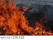 Купить «Горит сухая трава», фото № 276520, снято 7 мая 2008 г. (c) Григорий Погребняк / Фотобанк Лори