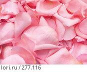 Купить «Лепестки роз», фото № 277116, снято 10 января 2008 г. (c) Вероника Галкина / Фотобанк Лори