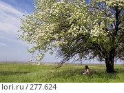 Купить «Девушка в тени цветущего дерева», фото № 277624, снято 20 апреля 2008 г. (c) Арестов Андрей Павлович / Фотобанк Лори