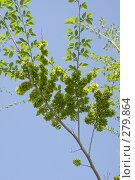 Купить «Ветка вяза весной», фото № 279864, снято 10 мая 2008 г. (c) Игорь Момот / Фотобанк Лори