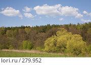 Купить «Опушка смешанного леса весной», фото № 279952, снято 27 апреля 2008 г. (c) Вячеслав Потапов / Фотобанк Лори