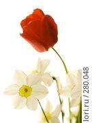 Весенний букет цветов. Тюльпан и нарциссы, фото № 280048, снято 3 мая 2008 г. (c) Евгений Захаров / Фотобанк Лори