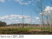 Купить «Весеннее болото», фото № 281260, снято 2 мая 2008 г. (c) Малышева Мария / Фотобанк Лори