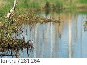 Купить «Берег болотного ручья», фото № 281264, снято 2 мая 2008 г. (c) Малышева Мария / Фотобанк Лори