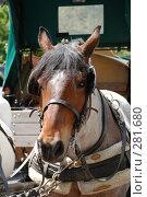 Купить «Лошадь», фото № 281680, снято 1 мая 2008 г. (c) Лифанцева Елена / Фотобанк Лори
