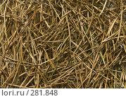 Купить «Текстура из сухих сосновых иголок», фото № 281848, снято 5 апреля 2008 г. (c) Надежда Болотина / Фотобанк Лори