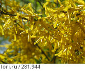 Купить «Желтые цветы», фото № 281944, снято 29 апреля 2008 г. (c) Мария Коробкина / Фотобанк Лори
