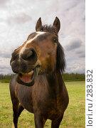 Купить «Лошадь», фото № 283832, снято 10 мая 2008 г. (c) Бутинова Елена / Фотобанк Лори