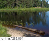 Купить «Бревно в воде», фото № 283864, снято 3 июля 2007 г. (c) Елена Александрова / Фотобанк Лори