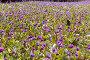Большая лесная поляна, фото № 284436, снято 8 мая 2008 г. (c) Михаил Павлов / Фотобанк Лори