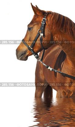 Купить «Лошадь», фото № 285156, снято 30 января 2007 г. (c) Андрей Армягов / Фотобанк Лори