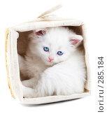 Купить «Котенок в корзине», фото № 285184, снято 26 марта 2007 г. (c) Андрей Армягов / Фотобанк Лори