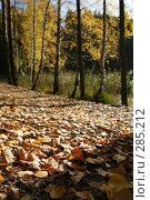 Купить «Листопад», эксклюзивное фото № 285212, снято 7 октября 2007 г. (c) Gagara / Фотобанк Лори