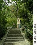 Купить «Красивая девушка в бамбуковой роще», фото № 285656, снято 23 октября 2018 г. (c) Вера Тропынина / Фотобанк Лори