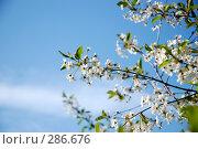 Купить «Нежная..», фото № 286676, снято 8 мая 2008 г. (c) Ekaterina Chernenkova / Фотобанк Лори