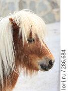 Купить «Пони», эксклюзивное фото № 286684, снято 26 апреля 2008 г. (c) Дмитрий Неумоин / Фотобанк Лори