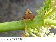 Купить «Клоп-черепашка на стебле», фото № 287044, снято 27 апреля 2008 г. (c) Олег Хархан / Фотобанк Лори