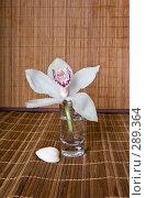 Купить «Орхидея», фото № 289364, снято 16 декабря 2017 г. (c) Светлана Кучинская / Фотобанк Лори