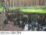 Купить «Лесное озерцо», фото № 289784, снято 30 июня 2007 г. (c) Сергей Сынтин / Фотобанк Лори