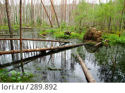 Купить «Упавшие деревья на болоте», фото № 289892, снято 30 июня 2007 г. (c) Сергей Сынтин / Фотобанк Лори